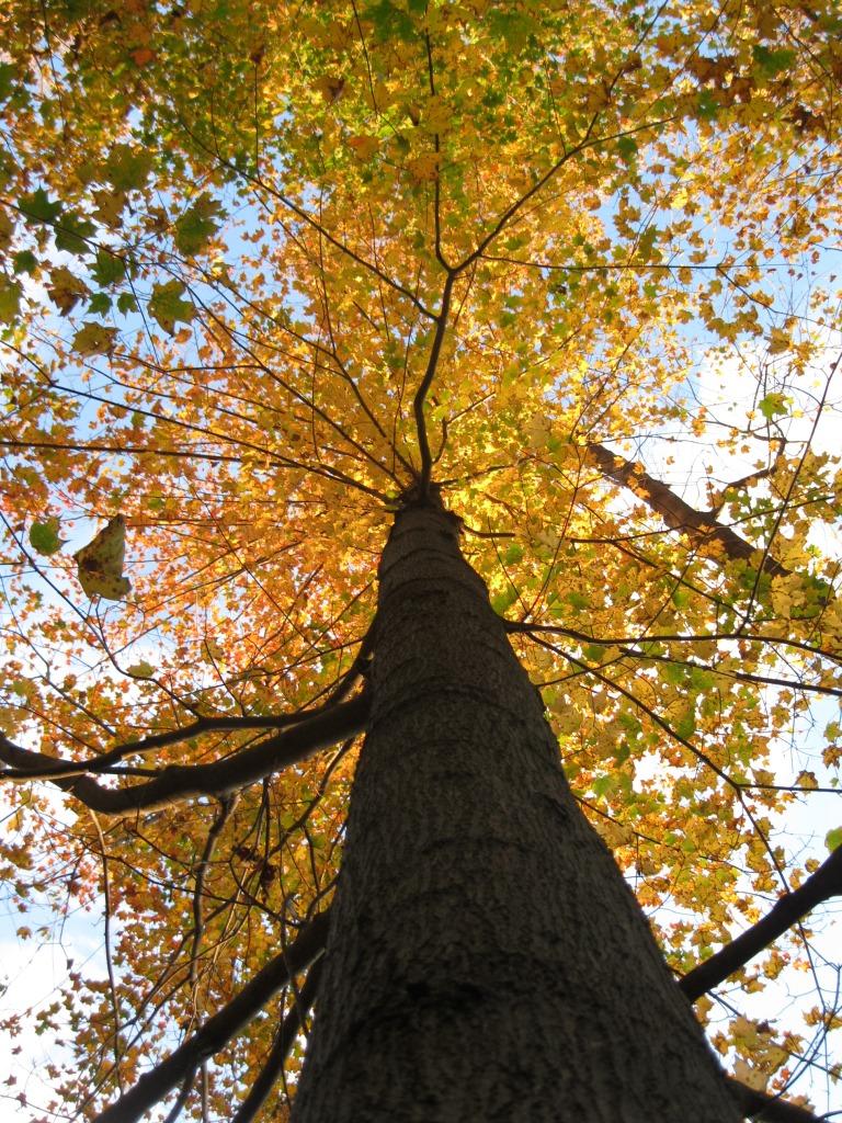 TreeOct05 (7)