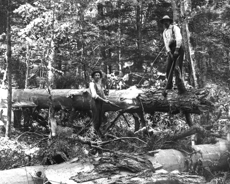 Old Logging